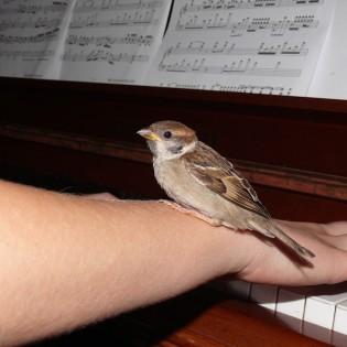 La musique et les animaux